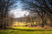 Woods at Felbrigg