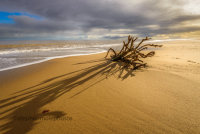 Roots on Hemsby Beach