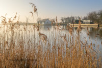Looking through the reeds at Thurne