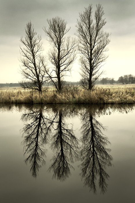 Three trees on the river bank