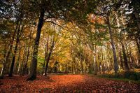 Bacton Woods in the Autumn