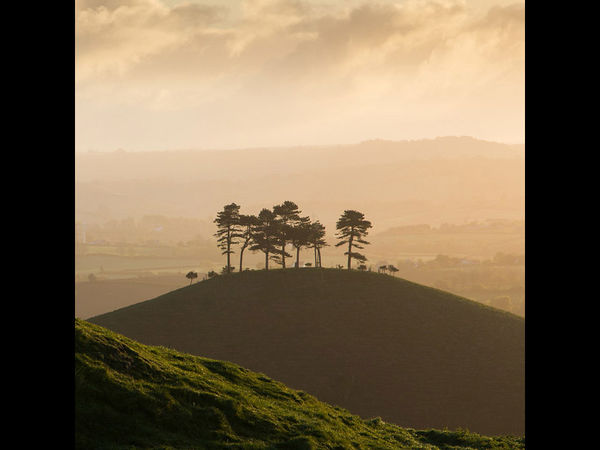 Colmer's Hill at dawn