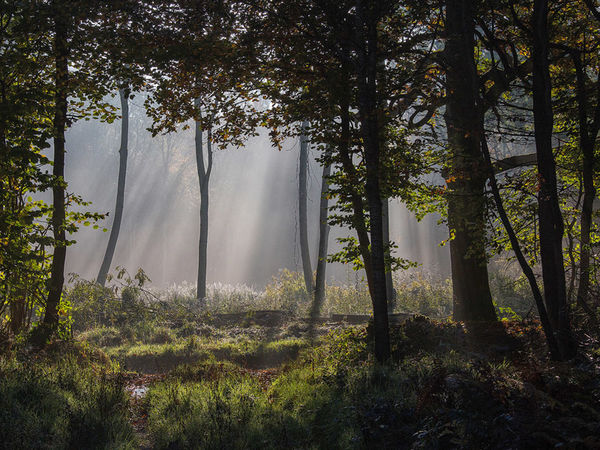 The Morning Woods
