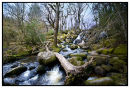 Dartmoor in Spring time