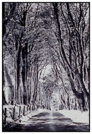 Dartmoor Avenue