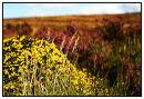Dartmoor in Colour