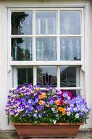 Wallington Window