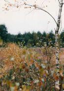 Loner in the autumn wood