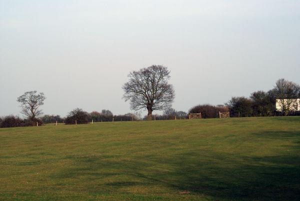 The Tree - Winter