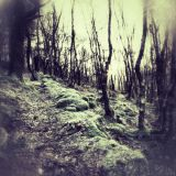 Frosty walk in the woods
