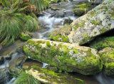 Great Otway National Park, Victoria