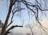 Kosciuszko National Park, New South Wales