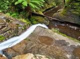 Liffey Falls State Reserve, Tasmania