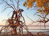Kinchega National Park, New South Wales