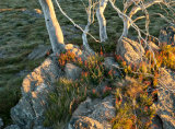 Alpine National Park, Victoria