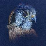 Original For Sale - IMG0045 A4 - £90