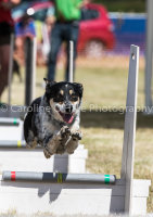 Scrumpys Flyball Tournament 17_06_17
