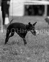 Thame and Oxfordshire Show 2017-101