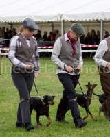 Thame and Oxfordshire Show 2017-104
