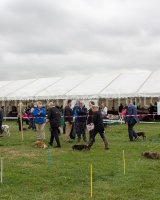 Thame and Oxfordshire Show 2017-114