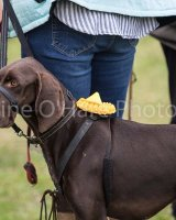 Thame and Oxfordshire Show 2017-125