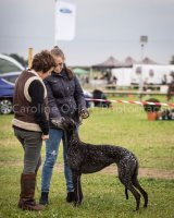 Thame and Oxfordshire Show 2017-126