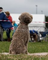 Thame and Oxfordshire Show 2017-12