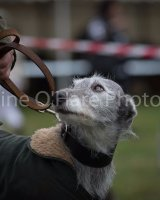 Thame and Oxfordshire Show 2017-134
