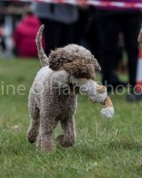 Thame and Oxfordshire Show 2017-14