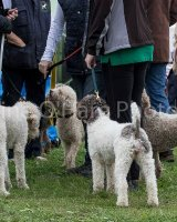 Thame and Oxfordshire Show 2017-15