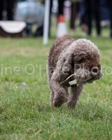 Thame and Oxfordshire Show 2017-18