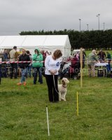 Thame and Oxfordshire Show 2017-19