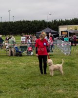 Thame and Oxfordshire Show 2017-20
