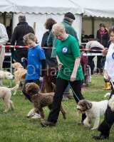 Thame and Oxfordshire Show 2017-2