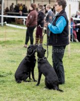 Thame and Oxfordshire Show 2017-30