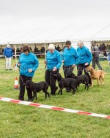 Thame and Oxfordshire Show 2017-33