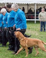 Thame and Oxfordshire Show 2017-34