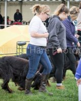 Thame and Oxfordshire Show 2017-35