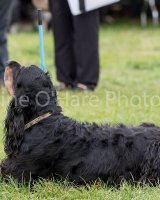Thame and Oxfordshire Show 2017-39