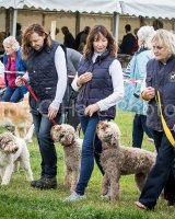 Thame and Oxfordshire Show 2017-3