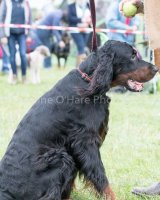 Thame and Oxfordshire Show 2017-40