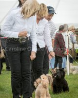 Thame and Oxfordshire Show 2017-43
