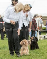 Thame and Oxfordshire Show 2017-44