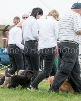 Thame and Oxfordshire Show 2017-46