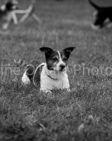 Thame and Oxfordshire Show 2017-58