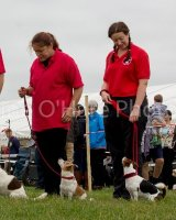 Thame and Oxfordshire Show 2017-66