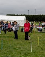 Thame and Oxfordshire Show 2017-67