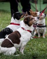Thame and Oxfordshire Show 2017-69