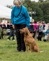 Thame and Oxfordshire Show 2017-76