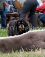 Thame and Oxfordshire Show 2017-83